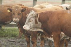 Chilean gauchos in patagonia Stock Photos