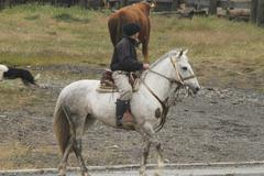 chilean gauchos in patagonia - stock photo