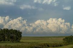 Cumulus Clouds over Meadow - stock photo