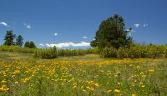Colorado Wildflowers with Clear Blue Sky Stock Photos