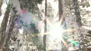 Stock Video Footage of Snowy Sun Flare in Forest