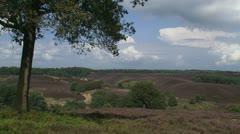 Zoom in heath landscape Veluwe Stock Footage