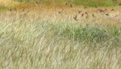Birds - stock footage