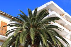 balearic arquitecture in ibiza. green palm over white building. - stock photo