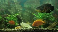 Akvaariokalat Arkistovideo