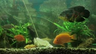 Fish in the aquarium Stock Footage