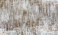 Empty bed of reeds in everglades florida Stock Photos