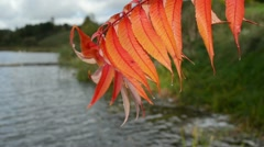 Wet autumn leaf rain move wind closeup blur lake shore water Stock Footage