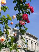 Roses and amphitheater Stock Photos