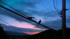 Birds On Telephone Lines Fly Away Stock Footage