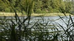 Reed belt at Lake Liepnitzsee, Brandenburg, Germany Stock Footage