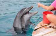 Stock Photo of feeding dolphins
