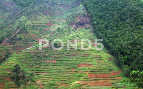 Stock photo of border of the bwindi impenetrable forest in uganda