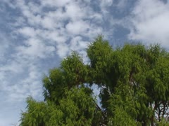 View of tree tops in Waitakere rainforest, New Zealand. Stock Footage