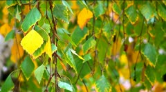 Leaves on branches - beginning of autumn Stock Footage