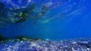 Underwater scene with sunrays and fish Stock Footage