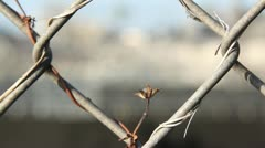 Jail/Prison Barb Wire and Fence(Rack Focus) Stock Footage