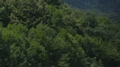 Mountain slope chestnus trees pan- village of Castasegna Stock Footage