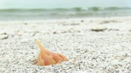 Close Up Shell on Beach Stock Footage