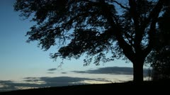 Horse chestnut (Aesculus hippocastanum) Stock Footage