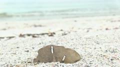 Sand Dollar On Beach Stock Footage
