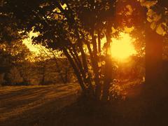 Golden magic sunset Stock Photos