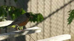 Robin on Pergola Stock Footage