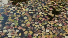Maple leaves in the water Stock Footage