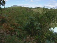 Pan hillside  - waterfall in waikato river Stock Footage