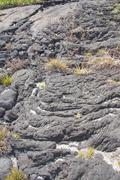 grass growing on old lava flow.. - stock photo