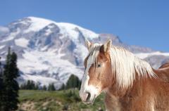 Brown horse .. Stock Photos