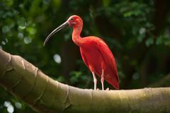 Pink tropical bird Stock Photos