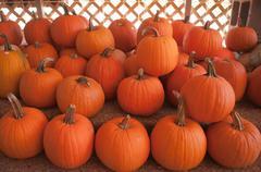 Pumpkins on pumpkin patch Stock Photos