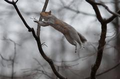 Jumping squirrel Stock Photos
