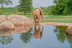 elephant reflection - stock photo
