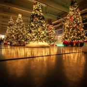 decorated christmas trees - stock photo