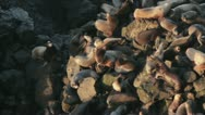 Sea Lions From Above on Rocks Stock Footage