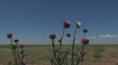 Wind Turbine among thistles- Green Energy Stock Footage