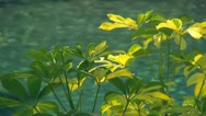 Yellow and Green Flowers with Moving Blue Water Background Stock Footage