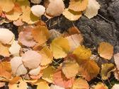 Stock Photo of leaves
