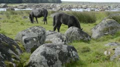 Horses in a beautiful landscape Stock Footage