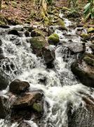 North Carolina winter stream Stock Photos