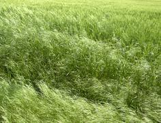 abstract green grassland - stock photo