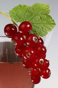 Stock Photo of redcurrant on glass