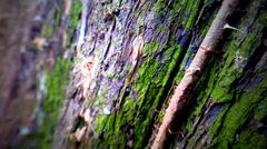 Green Bark Tree Stock Photos