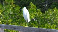 Tropical Bird in Foliage Stock Footage