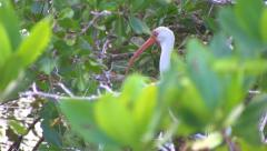Tropical Bird thru the leaves. Stock Footage