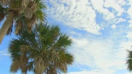 Palm Tree & Blue Cloudy Sky Stock Footage