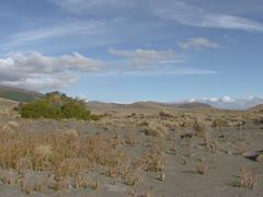 Rangipo desert pan tussock grass Stock Footage