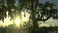 Sun Star Arizona Landscape Stock Footage